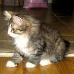 Camillo 12 Wochen alt