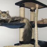 Cosmo 3,5 Jahre alt mit Pierroth 118 Tage alt