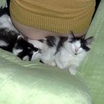 Calypso und Cheyenne 14 Wochen alt