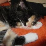 Leticia 8 Wochen alt