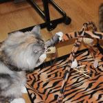 Olympia  5 Jahre und 3 Monate alt