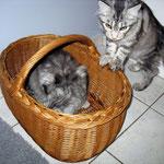 Metaxa und Maximus 6 Monate alt
