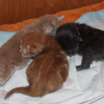 Georgia, Griselda und Galathea 4 Tage alt