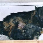 3 Wochen alt mit Geschwistern und Mama