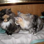 Frøya 3 Jahre und 9 Monate alt