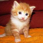 Tomcat 4 Wochen alt