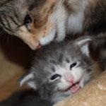 Hieronymus 3 Wochen alt