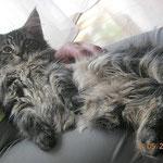 Dorian 3 Monate alt