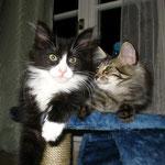 Dime 3 Monate alt mit Cosmo
