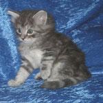 Fidelio 6 Wochen alt
