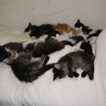 Cosmo 8 Wochen alt mit Geschwistern und Dimchen und D-Wurfosmo 2 Wochen alt