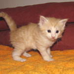 Tristan 4 Wochen alt