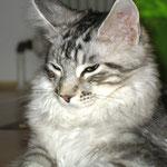 Metaxa und Maximus4,5 Monate alt