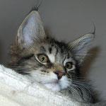 Galileo 10 Wochen alt
