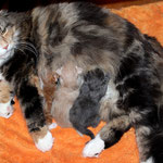 G2-Wurf 4 Tage alt mit Mama Yasmine