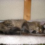 Penelope 4,5 Monate alt