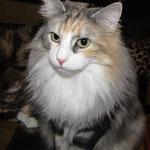Olympia  4 Jahre  alt