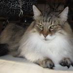 Amelie 10 Jahre und 4 Monate alt