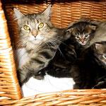 Daisy 3 Jahre und 4 Monate alt mit ihren D-Babies 24 Tage alt