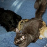 1 Jahr und 11 Monate zu Hause mit Amelie und Baloo