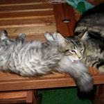 Goliath 5 Monate alt mit Harmony (Norw.Waldk.) 4 Monate alt