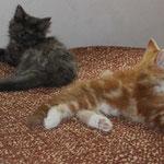 Galathea und Griselda 11 Wochen alt
