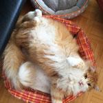 Tomcat 2 Jahre und 2 Monate alt