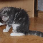 Hieronymus 9 Wochen alt