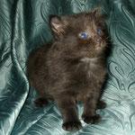 Baloo 4 Wochen alt