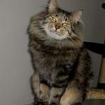 Cosmo 2 Jahre und 9 Monate  alt