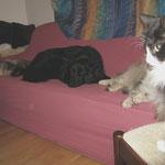 Daisy 4 Jahre  alt mit Norwegerin Dime und Euarsierhündin Lea