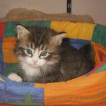 Camillo 6 Wochen alt
