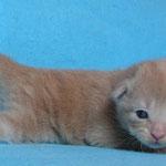 Pierroth 2 Wochen alt