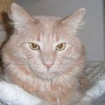 Pierroth 6 Jahre und 9 Monate  alt
