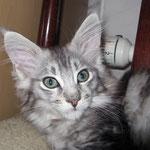 Mephisto 10 Wochen alt