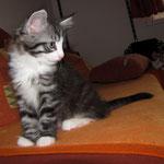 Osiris 8 Wochen alt