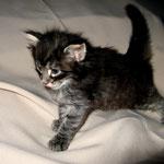 Humphrey 4 Wochen alt
