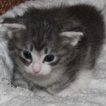 Hieronymus 4 Wochen alt
