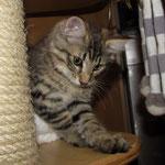 Peppone 13 Woche alt