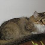 Amelie  4 Jahre und 2 Monate alt