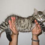 Athina 10 Wochen alt