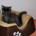 Galathea 13 Wochen alt