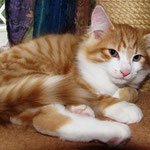 Tomcat 12 Wochen alt