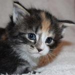 Bellaluna 4 Wochen alt
