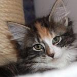 Bellaluna 10 Wochen alt