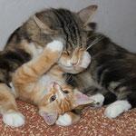 Fafnir 73 Tage alt mit Mama yasmine