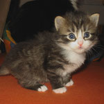 Camillo 4 Wochen alt