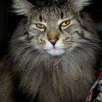 Cosmo 5,5 Jahre  alt