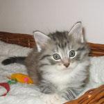 Elias 6 Wochen alt