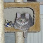 Rhapsodie 3 Monate alt